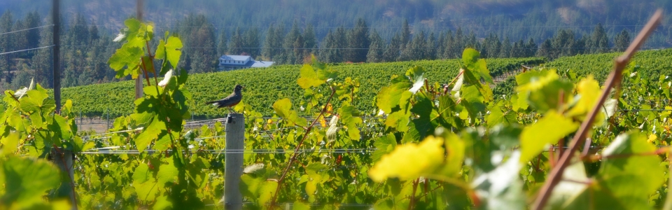 robin-at-liquidity-wines